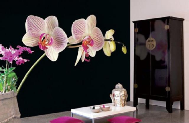 хорошие фотообои орхидеи