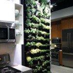 стены кухни фото