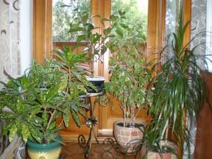 цветы-в-доме-300x225.jpg