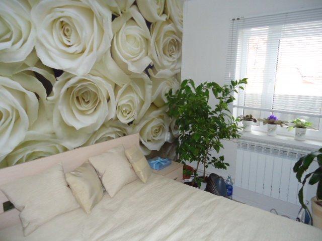 крупные белые розы на стене