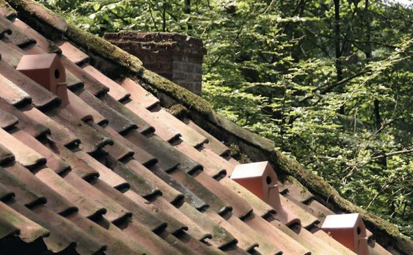 tiles-roof-birds