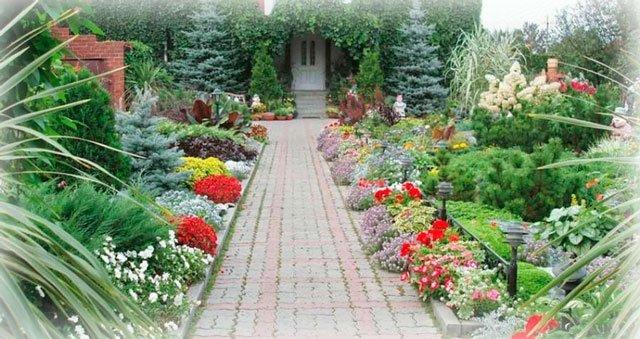 Какие растения посадить на даче